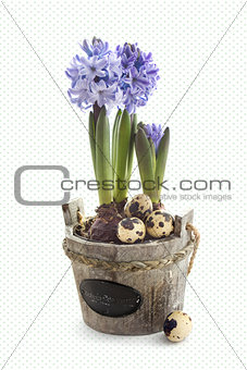 Easter  hyacinth flowers with quail eggs