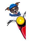 motorbike dog