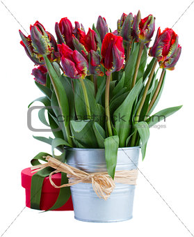pot of red tulip flowers