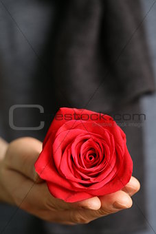 beautiful red rose in male hands (soft focus on roses)