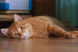 Cat Lying On A Floor