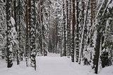 Ski path.