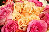 Fresh roses