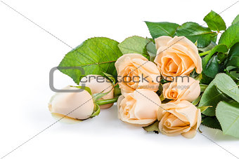 Beautiful rose flowers 03