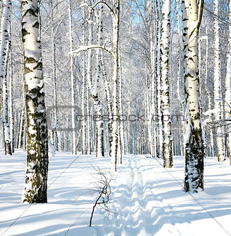 Ski run in winter forest