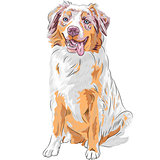 vector dog Red Australian Shepherd breed