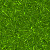 green transparent leaf pattern