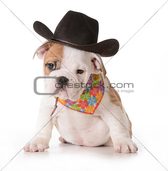 country dog