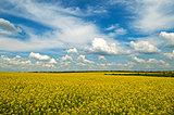 Spring - field