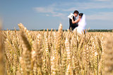 wheat field, newlyweds in the background of the
