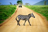 How many times have I told you to slow down when you see a zebra crossing?