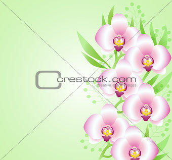 Green background with orchids
