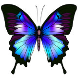Butterfly isolated blue vector illustration