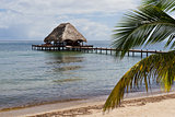 Tropical Belize