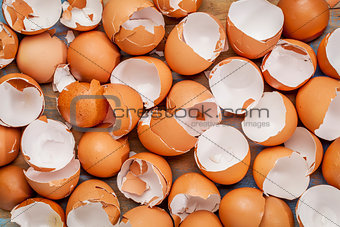 broken chicken eggshels