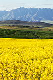 Agricultural farmland overlooking snow capped mountain range