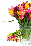 fresh tulips in vase close up