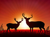 Deer on Sunset Background