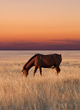 Horse grazing in pasture at sunset
