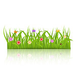 Green grass with flower isolated on white background
