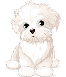 Maltese Puppy Dog