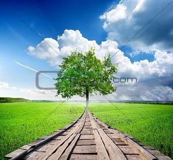 Green tree and bridge