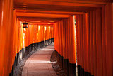 Path Through Torii Gates