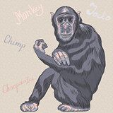 vector funny cartoon monkey Chimpanzee