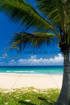 Palm tree on a tropical beach