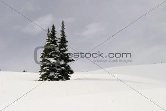 Three Fir Trees In Snow