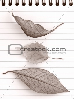 autumnal notepad