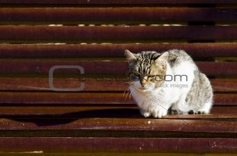 Cat in bench