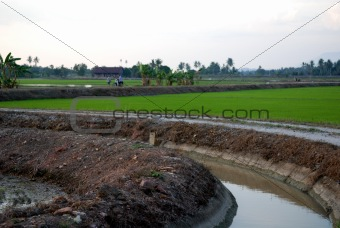 house, paddy field and sky at the countryside