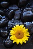 Aromatherapy sunflower