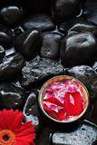 Aromatherapy petals and gerber daisy