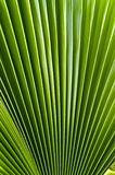 Frond Fill