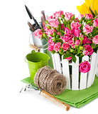 Pink roses and tulips with garden tools