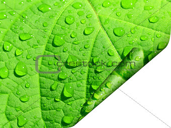 Frame of a green leaf