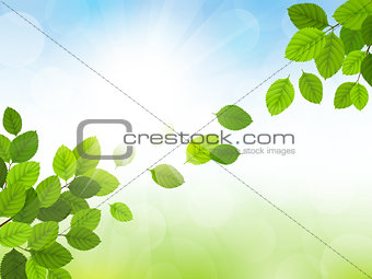 Spring vector with leaves