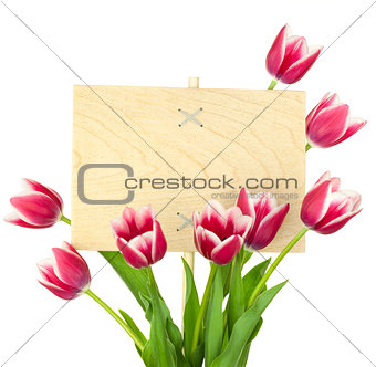 Beautiful Tulips and Empty Sign for text / wooden panel / isolat