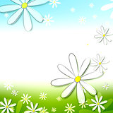 spring white flowers in blue green background