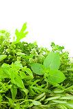 Border of Different Fresh Spice Herbs  over white background / v