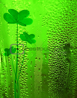 Green clover lucky beer background