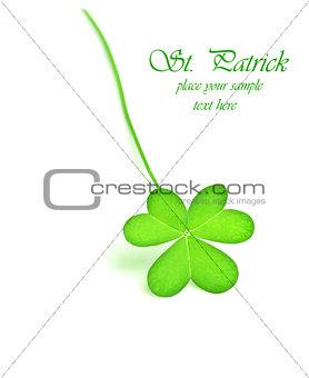 Green fresh clover