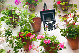 Flowerpots and red flower on a white wall with vintage lantern.