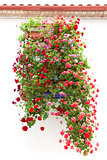 Typical Window decorated Pink and Red Flowers, Mediterranean Eur
