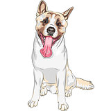 vector sketch dog Akita breed smiles