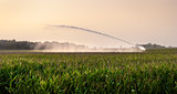 irrigation on corn field