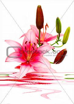 Beautiful arrangement of lilies.