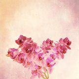 texorchidtured old paper background with  magenta phalaenopsis